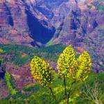 """Waimea Canyon Iliau"" by skystudiohawaii"