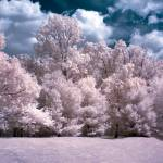 """Infrared Dreams"" by photocatphoto"