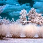 """Infrared Bushes"" by photocatphoto"