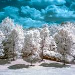 """Infrared Country"" by photocatphoto"