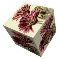 Gerbera Cube on White