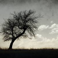 Lone Tree Silhouette Art Prints & Posters by mike irwin