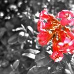 """Pink Flower"" by katielynn21"