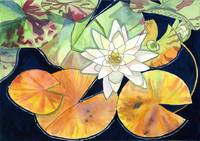 White Waterlily and Lilypads