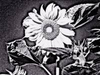 Flowers gallery