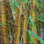 """Bamboo"" by erinslosser"