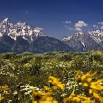 """Grand Tetons Panorama"" by dtedesco"