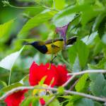 """Bird - Bali"" by Kjaerum"