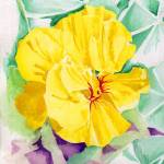 """Yellow Nasturtium"" by splynch"