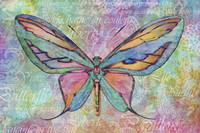 The colorful butterfly