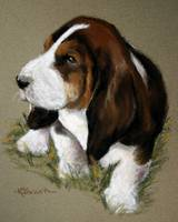 The Little Basset