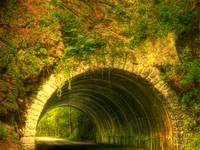Tunnel in the Woods