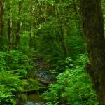 """Enchanted Forest"" by jebrunner58"