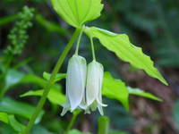 Smiths Fairybells Fairy Lanterns