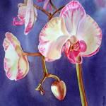 """""""Orchid"""" by IrinaSztukowski"""