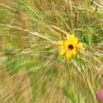 """""""Wildflower Abstract"""" by shelshots"""