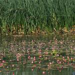 """Reeds and Weeds IMG_8634"" by rayjacque"