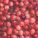 """Cranberries"" by dominicwhite"