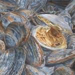 """Clams"" by dominicwhite"