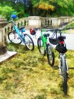 Line of Bicycles in Park
