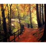 """""""Forest Path"""" by kenarts"""