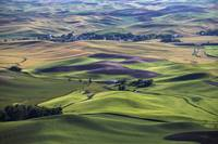 Washington's Palouse