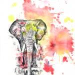 """Elephant in Red Splatter Painting"" by idillard"