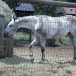 """""""Dirty gray horse"""" by belinda_baardsen"""