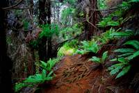 Kula Forest Trail