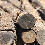 """Colorado Cut Logs"" by belinda_baardsen"