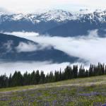 """Hurricane Ridge - Olympic Mountains"" by Dullinger"
