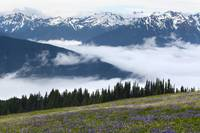 Hurricane Ridge - Olympic Mountains