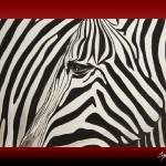 """zebra framed"" by Spangles44"
