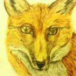 """The Red Fox"" by Serena_SCm"