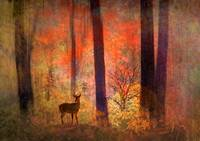 Forest Visitor