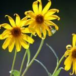 """""""Wild Flowers"""" by belinda_baardsen"""