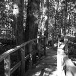 """Swamp Boardwalk"" by madworld"