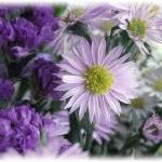 """Asters and Statice"" by GiorgettaMcRee"