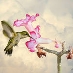 """Desert Rose and Hummingbird"" by spadecaller"