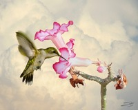 Desert Rose and Hummingbird