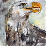 """Bald Eagle Watercolor and Ink by Ginette"" by GinetteCallaway"