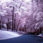 """Entering the Park in Infra Red"" by greatcaptures"