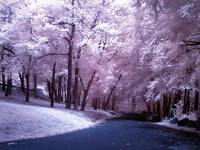 Entering the Park in Infra Red