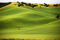 Slopes of the Palouse