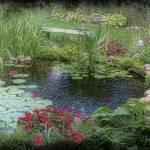 """""""July Pond"""" by BarbaraZuz"""