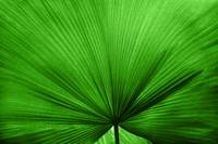 The Big Green Leaf
