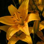 """Golden"" by edgabel"