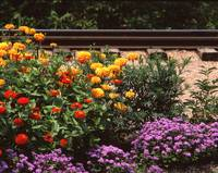 Flowers by Train Tracks