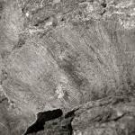 """Fossil?"" by ChristinaVerdi"