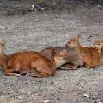 """""""Deers"""" by kuart"""